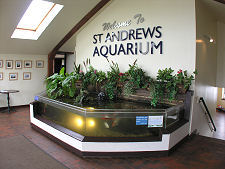 St Andrews Aquarium Feature Page on Undiscovered Scotland