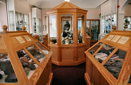 Natural History On The Upper Floor